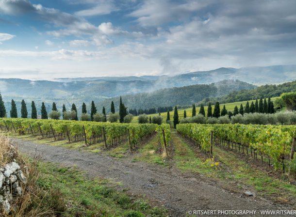 Wine fields in Tuscany - Italy